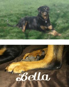 Above All - Bella